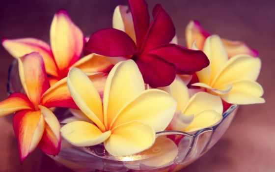 frangipani, плюмерия, plumeria, pillow, infrared, бросок, дерево, цветы, cvety, flowers,