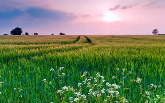 cvety, природа, поле, summer, трава, вечер, небо, landscape