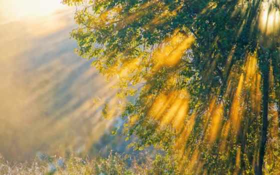 summer, последний, день, трава, природа