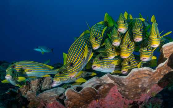 underwater, fish, море, world, life