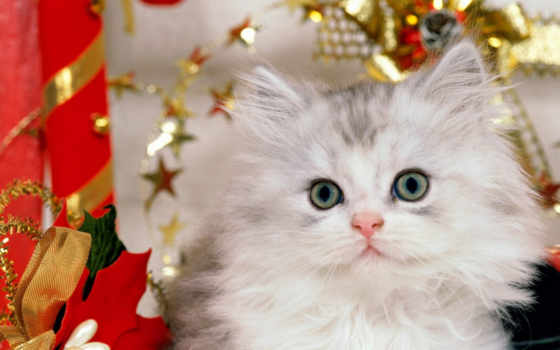 christmas, kitten