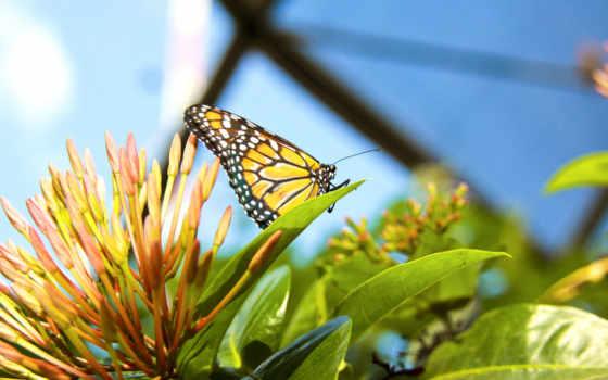 бабочка, растение