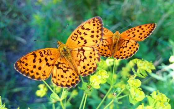 веточки, бабочки, весна, зелень,насекомые,