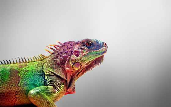iguana, татарстан, работы