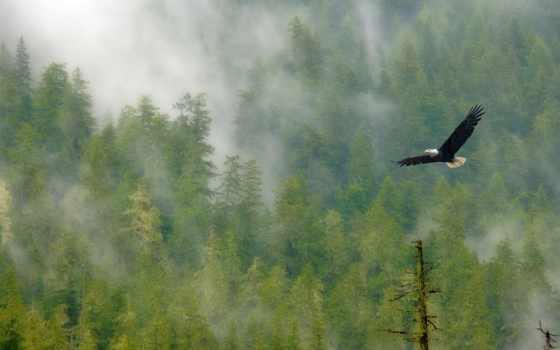 орла, полет, со