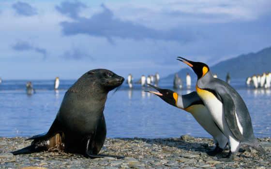 морские, пингвины, котики