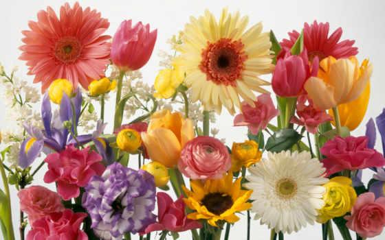 flowers, цветы, seeds