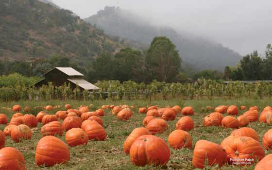 тыква, stock, пасть, патч, photos, pumpkins, images, листья, free,