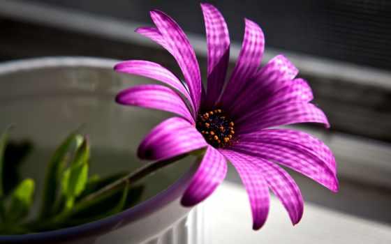 cvety, цветы, заставки, весенние, flora, сиреневый,