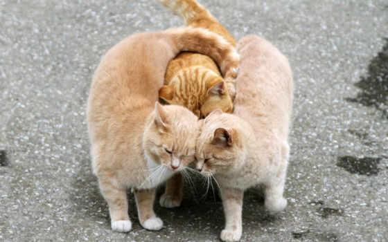 обнимашки, кошки, коты, кошку, объятие, feline, обнимаются, ласковой, кошек, сделать, групповые,