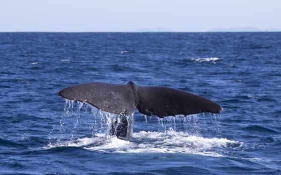 ocean, кит, desktop, теме, тема, kit, tail, top,