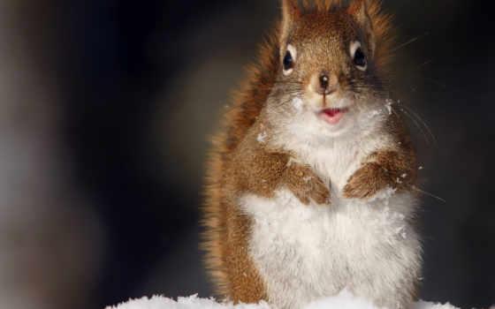 белки, белки, снег, зимой, zhivotnye, winter,