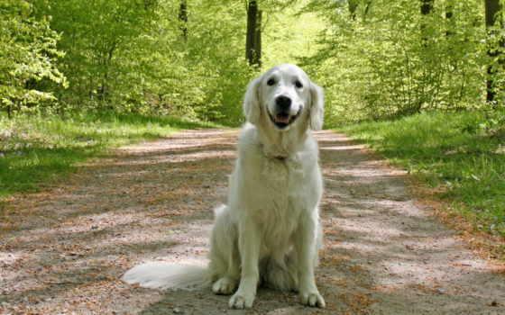собака, dogs, pinterest, картинка, красивые,