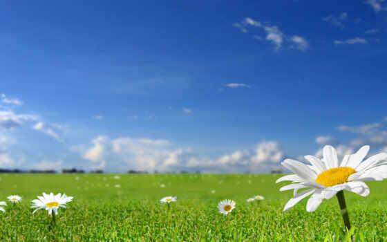 ромашка, summer, небо, природа, поле, вектор, трава, коллекция