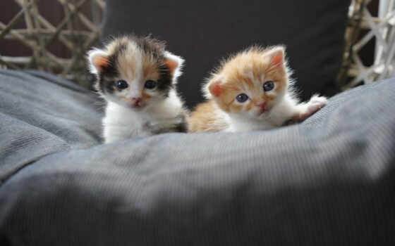 котенок, два, baby, кот, cute, next, кровать, animal, малыш