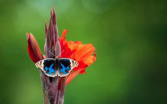 бабочка, крыло