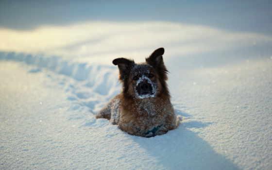 собака, снег Фон № 6859 разрешение 1920x1080