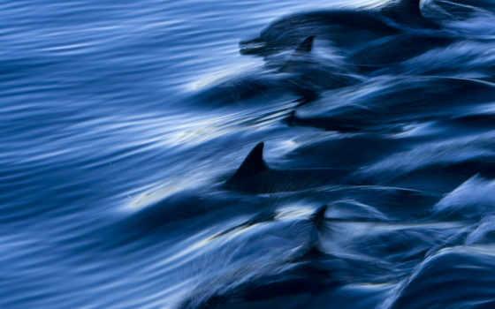 дельфин, dolphins, free