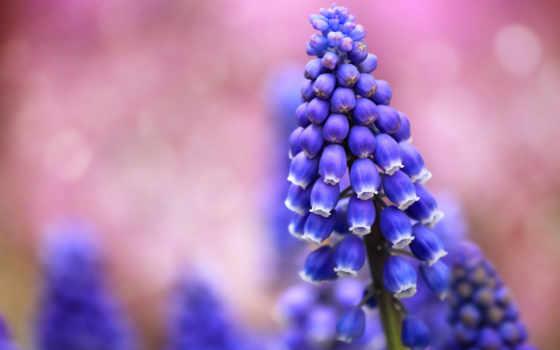 цветы, размытость, самые