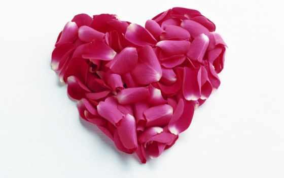 сердце, лепестков, роз