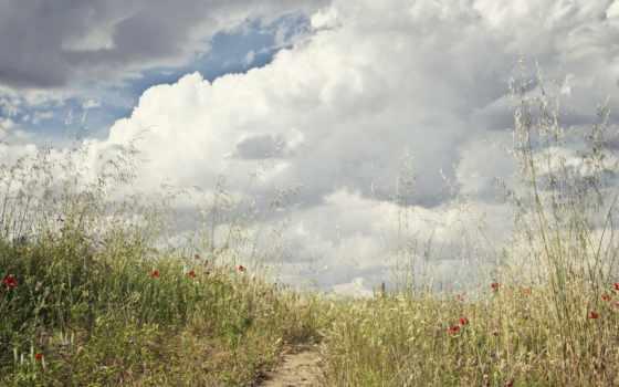 небо, oblaka, поле, трава, тропинка, цветы,