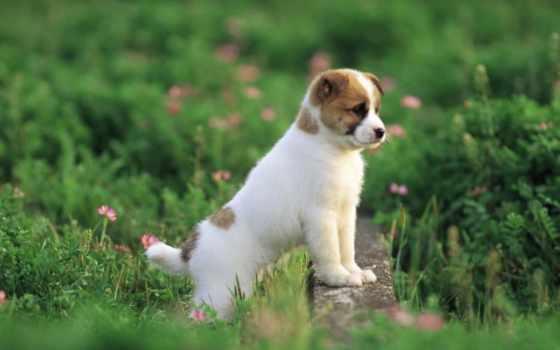 zhivotnye, страница, dogs, об, трава, установить, possible, картинкой,