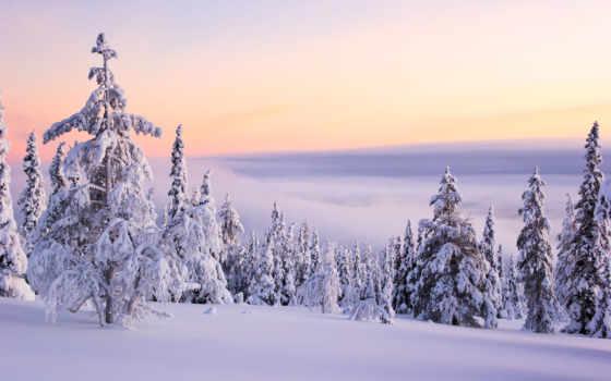ecran, fonds, neige, des, paysage, fond, arbres,