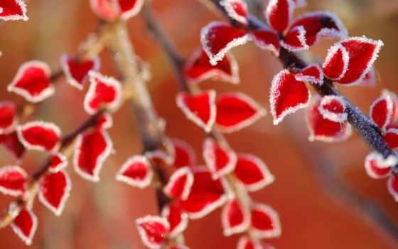 листья, иней, red, desktop, preview, winter, природа, макро,