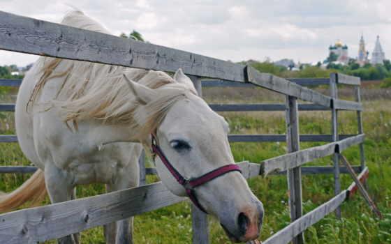 лошадь, animals, лошадей
