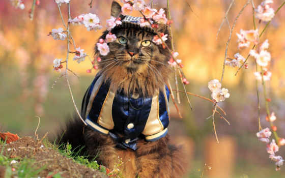 цветы, кот, костюм