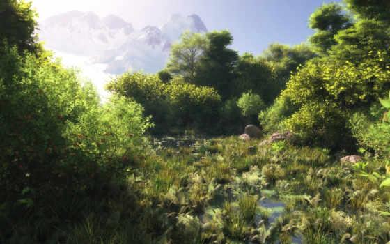 болото, water, лес