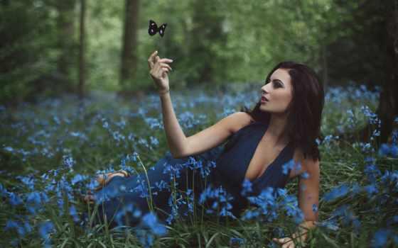 коллекция, бабочки