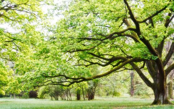 ,дерево, лето, ветки, зелень,