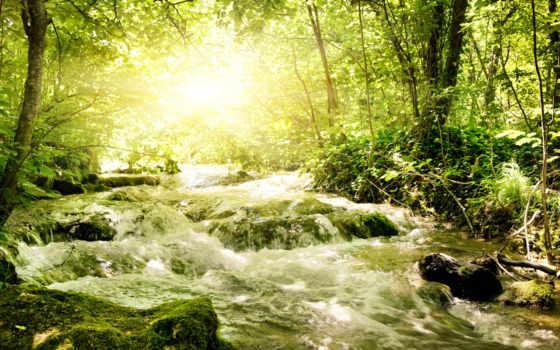 лес, река, весна, бурная, свет, лесу, sun, зелёный,