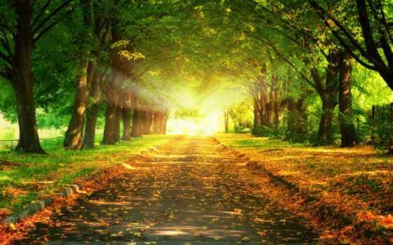 природа, осень, trees, sun, свет, трек, аллея, rays, листва, дорога, park,