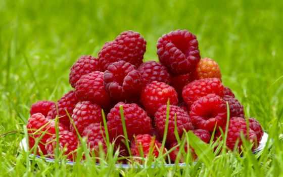 плод, малина, summer, water, fresh, ecran, lumière, fonds,