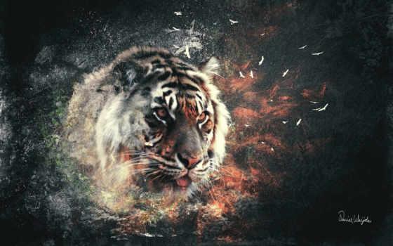 тигр, тигры, кот, wpapers, bang,