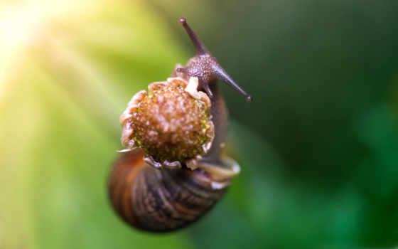 snail, eating, природа, зелёный, цветы, клубника, animals,