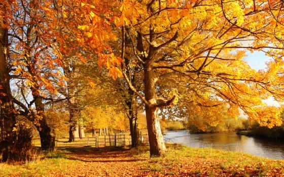 осень, лес, trees, sun, желтые, река, природа, water, камни, scotia,