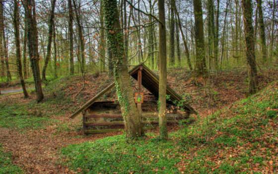 листва, осень, лес, hessen, картинка, природа, forests, германия,
