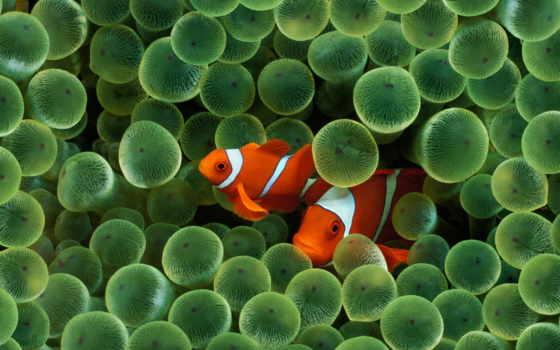 underwater, красивые, fish, world, everything, море, рыбки, коллекциях, яndex,