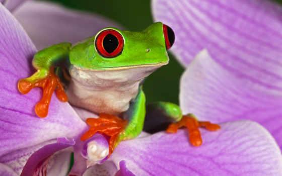 más, лягушка, sapos, ranas, los, animal, cvety, природа,