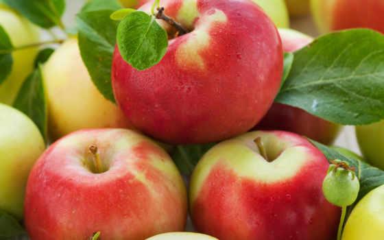 яблоки, червивые, сне, apple,