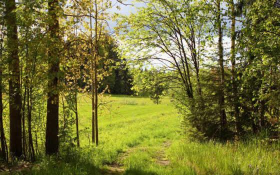 лес, природа, поляна, landscape, cvety, газон, summer, коллекция