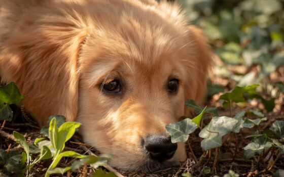 собака, бешенство, pet, друг, площадь, прочитать, detailed, website, russian