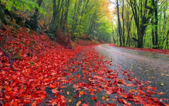 природа, небо, дорога, деревья, пейзаж, листья, лес, autumn, trees, landscapes, rainy,
