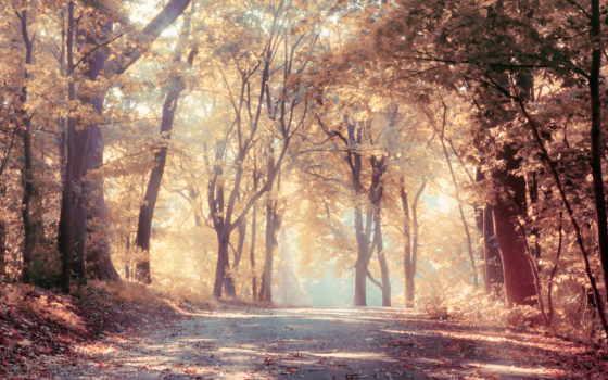 природа, листва, дорога, листья, trees, красивая, красивые, осень, дуб, scenic,