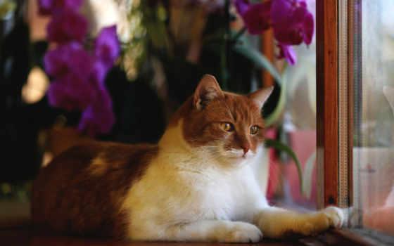 кошки, страница, кот, квадро, уже, animal, окошке, zhivotnye, сидела,