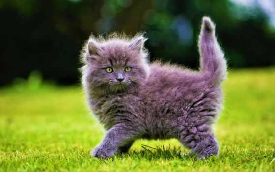 коллекцию, посмотрите, яndex, коллекциях, милые, котята, пушистые,