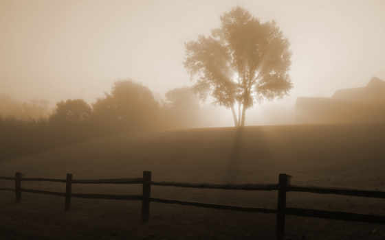 morning, foggy, weather, photo, world, personality, one, yahoo,